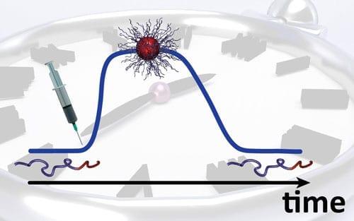 Scientists program the lifetime of self-assembled nanostructures
