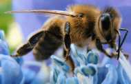 Pesticides alter bees' brains, making them unable to live and reproduce adequately