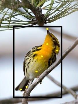 Merlin Identification Tool: Auto-Identify 400 Species of Birds