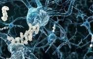Scientists Develop Antibody to Treat Traumatic Brain Injury and Prevent Long-Term Neurodegeneration
