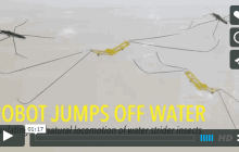 Robotic insect mimics Nature's extreme moves