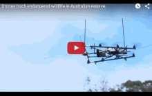 Drones used to track wildlife