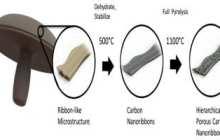 Making Batteries with Portabella Mushrooms