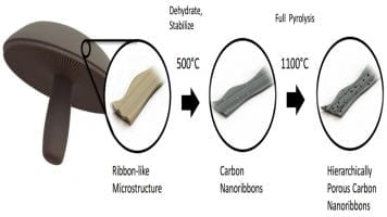 Diagram showing how mushrooms are turned into a material for battery anodes.