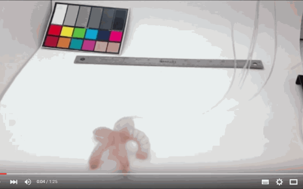 Soft robot changes color as it grips and walks