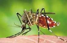 Street Lamp Targets Dengue Fever - maybe Zika?