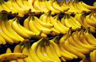 The imminent death of the Cavendish banana and why it affects us all