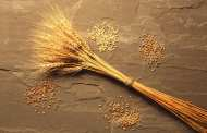 Enzymes with the potential to increase wheat yields