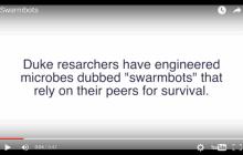 Duke University bioengineers design swarmbots that die if they leave the confines of their capsule