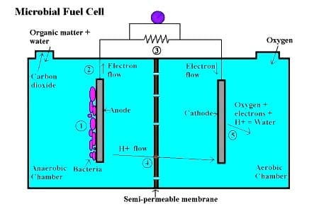 Scientists develop a new microbial fuel cell that requires no external energy source