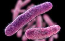 Using bacteria to kill bacteria as a