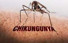 First safe and effective Chikungunya vaccine from virus has no adverse effects on people