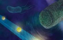 A device sensitive enough to feel the forces generated by swimming bacteria and hear the beating of heart muscle cells