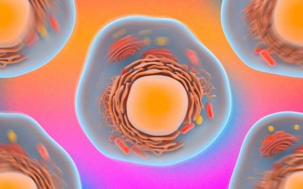 New fast and noninvasive technique could reveal disease