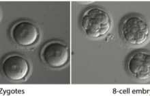 Scientists correct a disease-causing mutation in early stage human embryos with gene editing for the first time