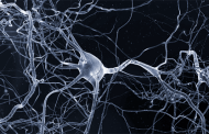A new kind of antibody could provide a unified treatment approach for major neurological diseases