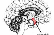 Neuroscientists have identified a brain mechanism that is linked to aggression and violent behavior