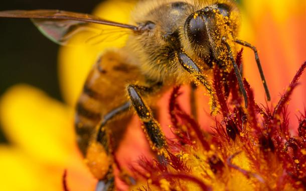 The world's most widely used weed killer may also be indirectly killing bees