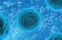 New hope for regenerative medicine using
