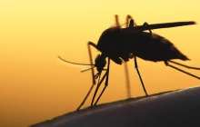 Could graphene be used to block mosquito bites?
