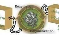 A truly green alternative to PET (polyethylene terephthalate)?