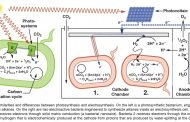 Could engineered bacteria be the missing link in energy storage?