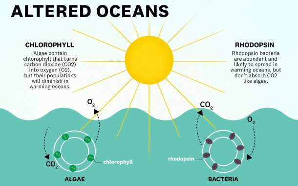 Is this how certain marine microbes could contribute to climate change?