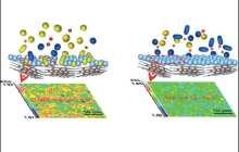 Potassium-ion batteries made safe
