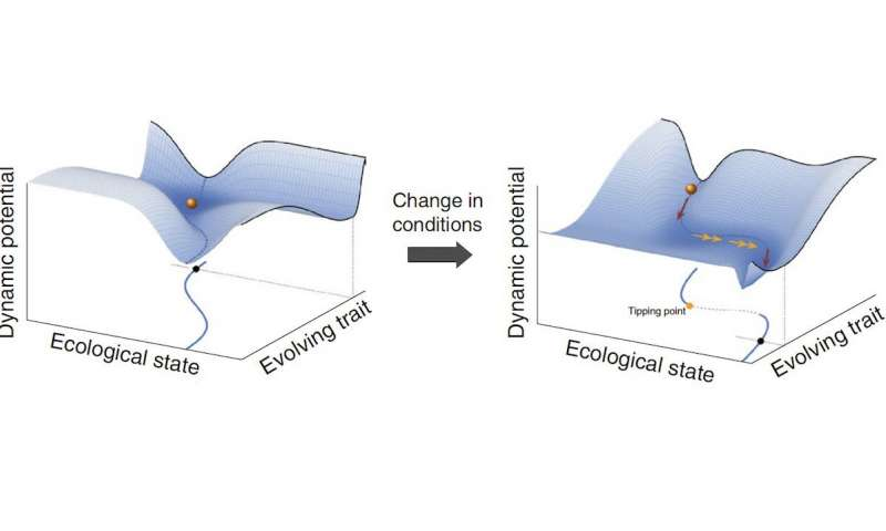 Two evolutionary spaces illustrate how a small change in environmental conditions with few immediate effects opens up a gradual path toward regime change (Figure: Andre de Roos)