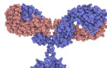 Fighting emerging viruses with synthetic antibodies built with bacterial superglue