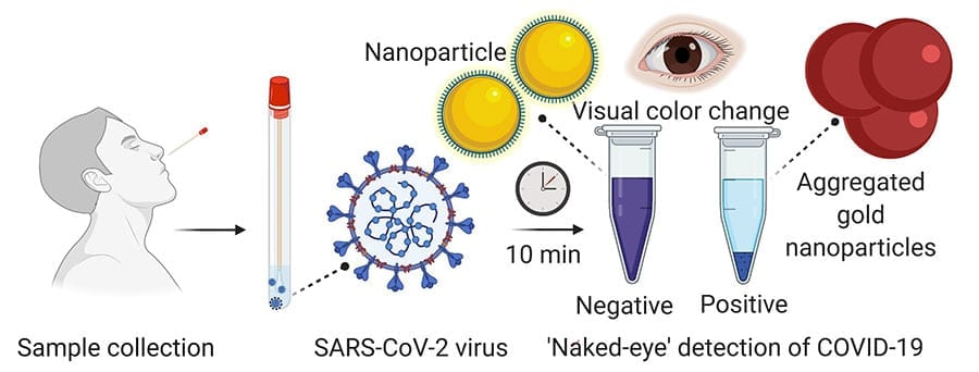 A nasal swab containing a test sample is mixed with a simple lab test. It contains a liquid mixed with gold nanoparticles attached to a molecule that binds to the novel coronavirus. If the virus is present, the gold nanoparticles turns the solution a deep blue color (bottom of the tube) and a precipitation is noticed. If it is not present, the solution retains its original purple color.