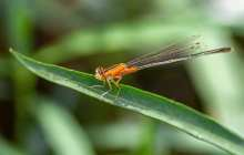 Citizen Science: A global citizen network to monitor insect abundance