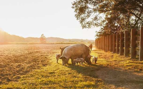 Could swine coronavirus spread to humans?
