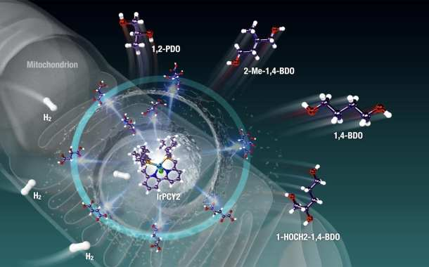 Breakthrough: Harvesting energy from living cells to help create a zero-carbon world