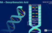 Using light to switch DNA functions on and off
