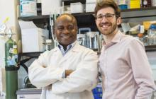 Synthetic llama antibodies could be used to treat dozens of diseases