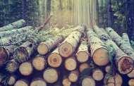 Using wood to make sustainable plastics
