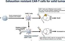 Fighting cancer by reviving exhausted immune cells could help T cells effectively attack solid tumors