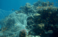 Enabling a transition to biodegradable, compostable fishing nets coupled with the collection of old nets