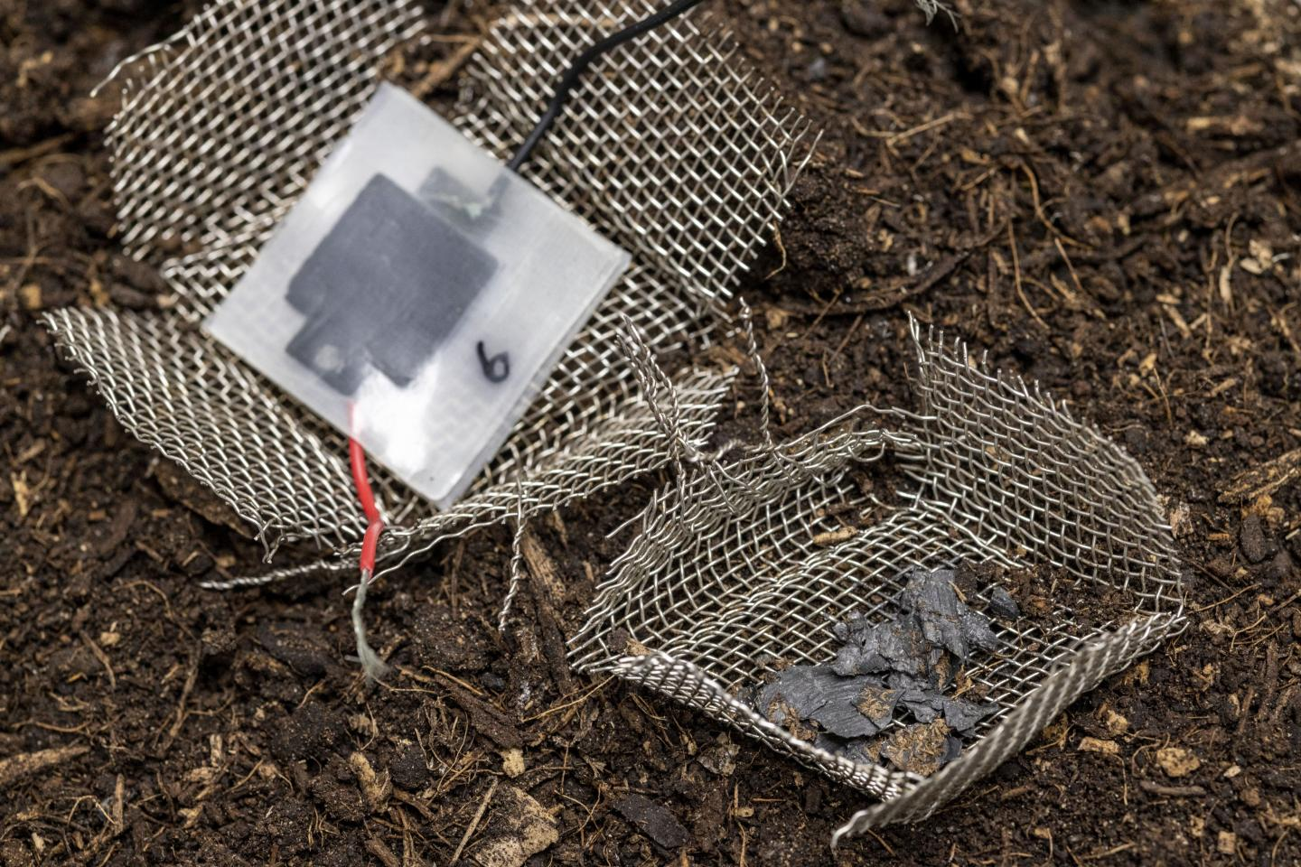 After two months buried in the soil, the capacitor has disintegrated, leaving only a few visible carbon particles. Image: Gian Vaitl/ Empa.