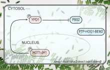 Fast synthetic biology circuits
