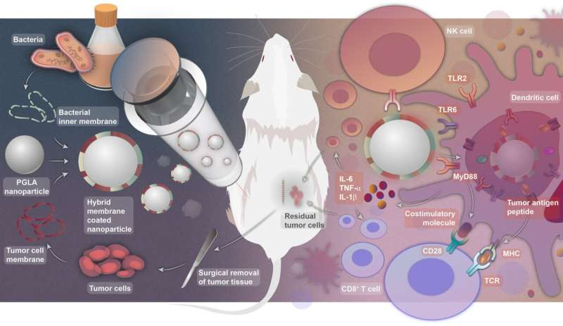 How to make the personalized antitumor vaccine and how it works (Image by NCNST)