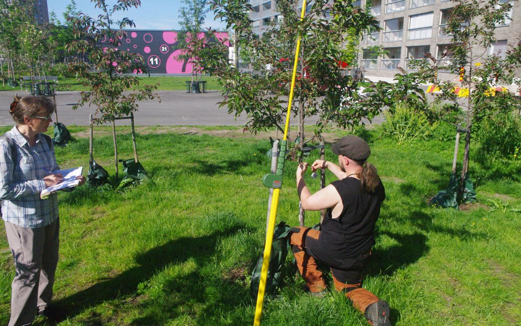 The project team continues to follow up research of the Hyväntoivonpuisto carbon sequestration park in Helsinki according to the principles outlined in the policy brief. (Image: Priit Tammeorg)