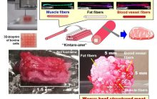 First 3D-bioprinted structured Wagyu beef-like meat: Raising the steaks on structured cultured meat