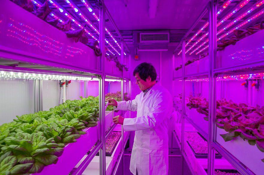 Professor Chungui Lu in the university's existing container farm