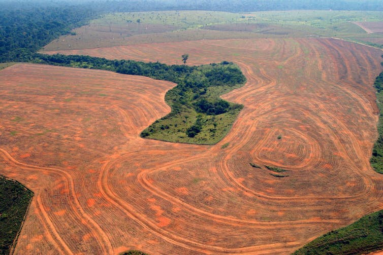 Destruction of the Amazon has fuelled the push for a new international crime of 'ecocide'. Greenpeace