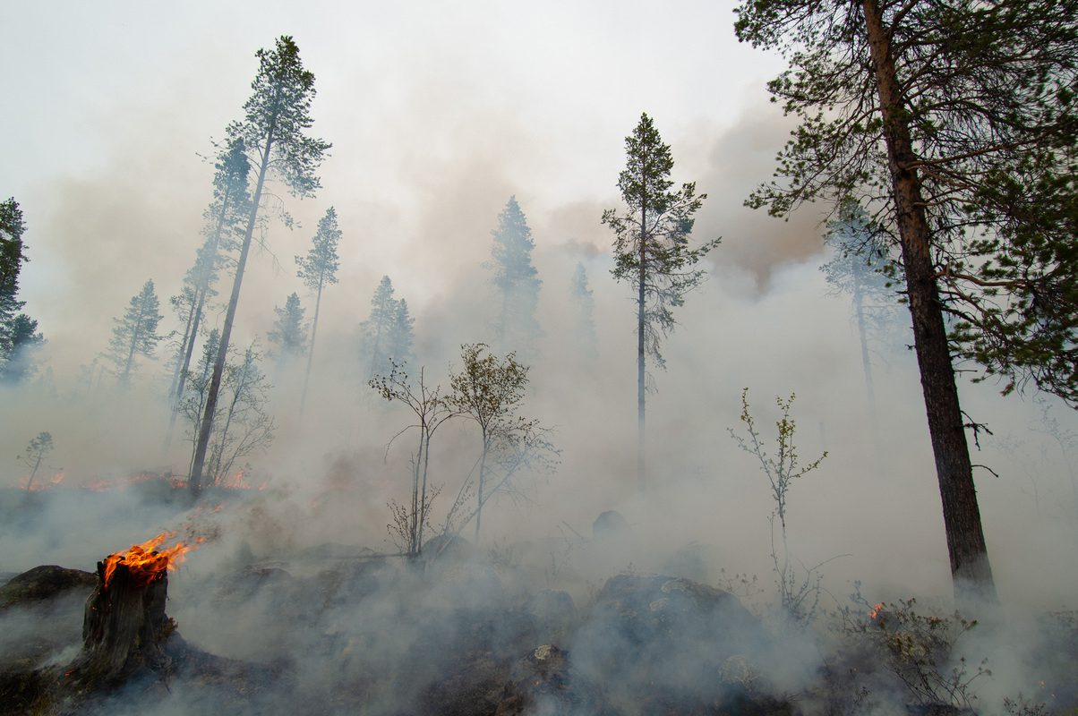 Forest fire, but a controlled one, burning off a clearcut area in order to try to speed up the forest rocuperation process. It is called Conservation Burning... Outside Porjus, Norrbotten, Lapland, Sweden