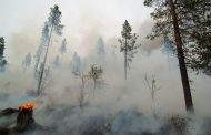 Can the use of large herbivores can be an effective means to prevent and mitigate wildfires?
