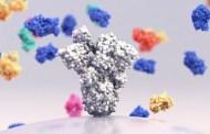 A highly potent antibody against SARS-CoV-2