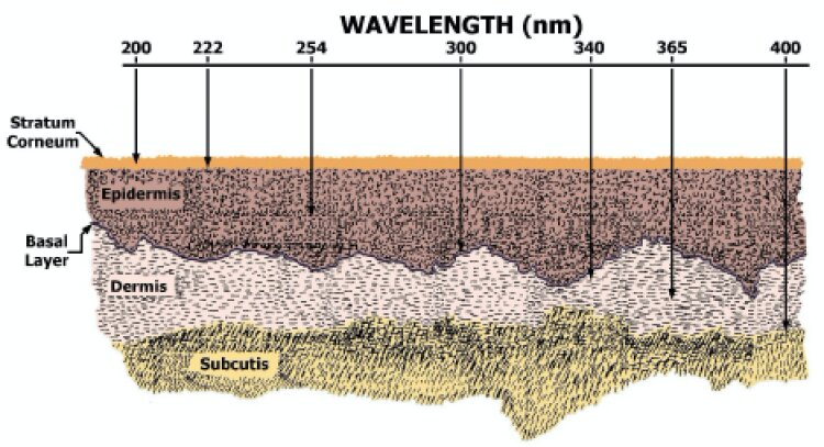 """Different wavelength of UV light, measured here in nanometers, can penetrate skin down to different layers. The farther down into the skin these wavelengths go, the more harm they can cause. (Credit: """"Far UV-C Radiation: Current State-of Knowledge,"""" published by the International UV Association in 2021)"""